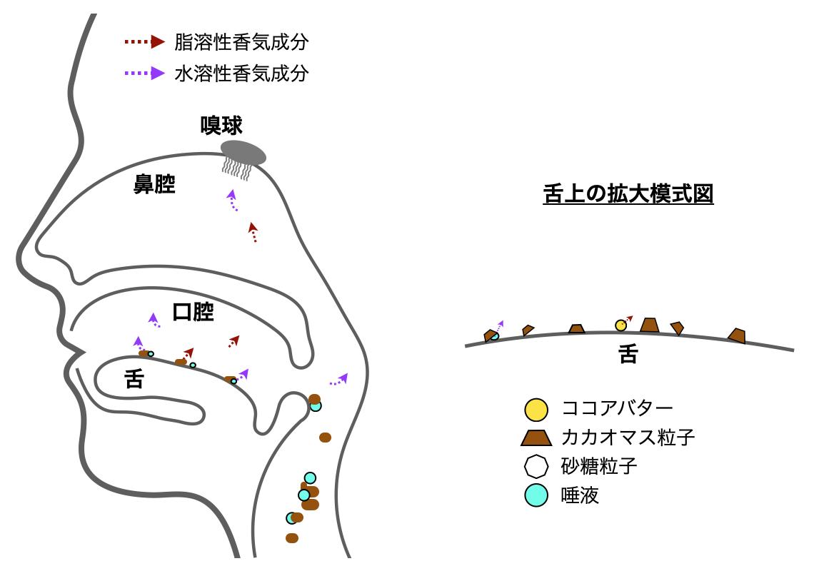 口中でのフレーバーリリースの模式図