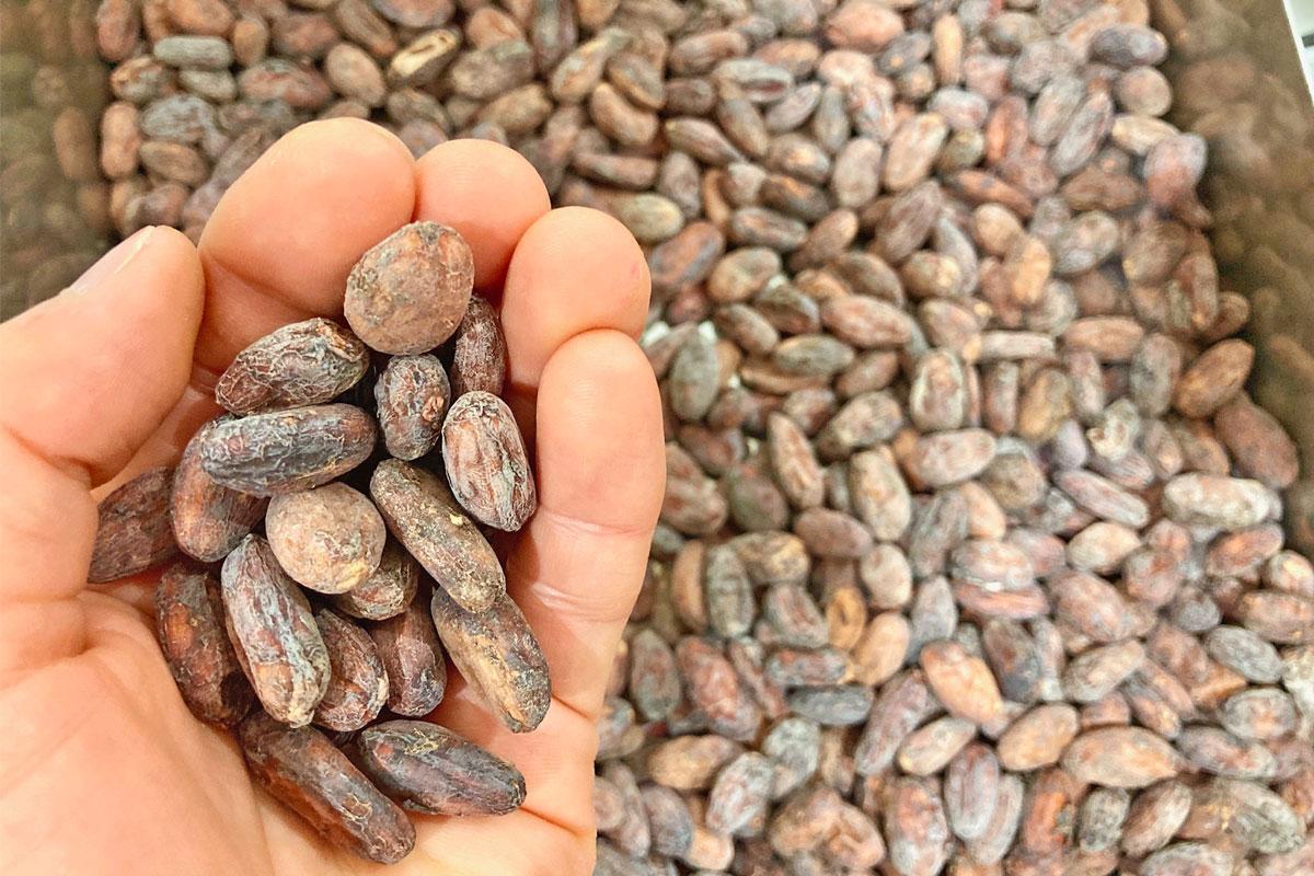 ベトナム産のカカオ豆